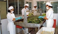 Preparación de los Frutos al Proceso de Fabricación de Pulpas